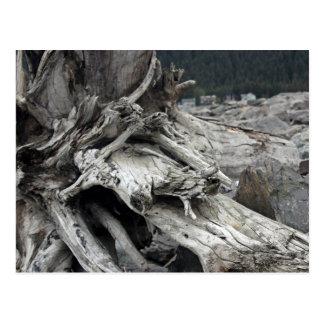 Drift wood postcard