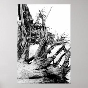 Adamophoto Drift Wood Poster