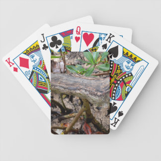driftwood against buttonwood beach bicycle playing cards