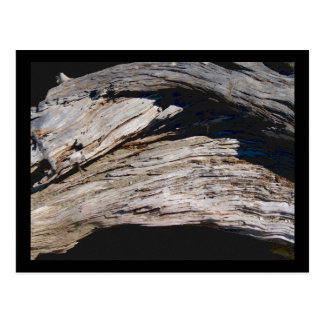 Driftwood Arch photo painting Postcard
