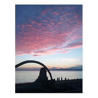 Driftwood Arch Sunset Postcard
