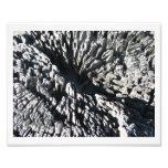 Driftwood Arte Fotografico