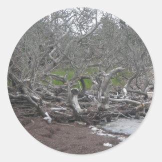 Driftwood & Eel Grass Sticker