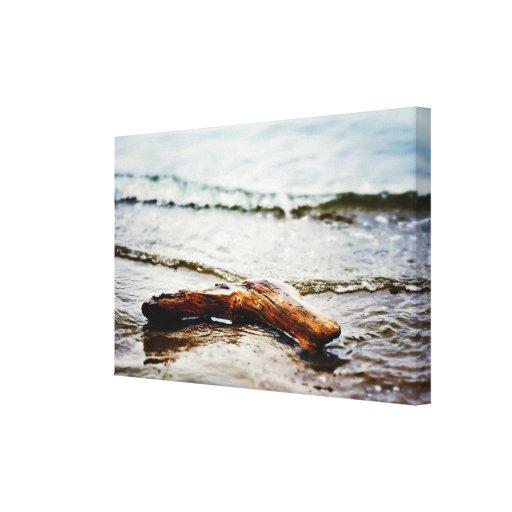 Driftwood en la orilla lona envuelta para galerías
