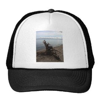 Driftwood en la playa gorro