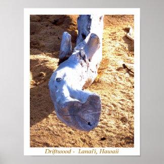 Driftwood hawaiano de la playa posters