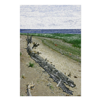 Driftwood log on the beach - canvas print