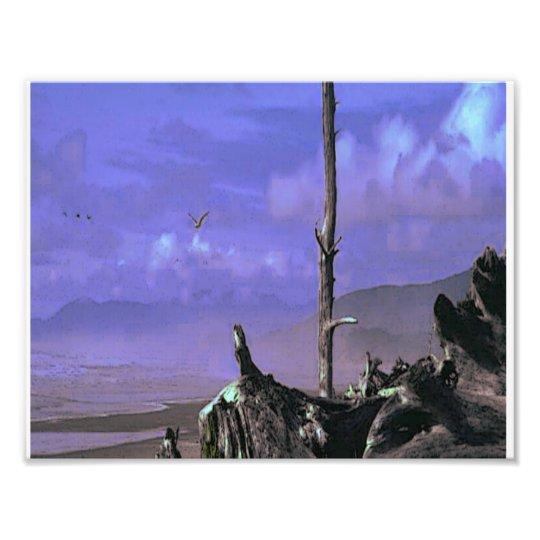 Driftwood on Beach Photo Print