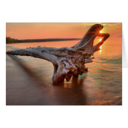 Driftwood On Meyers Beach At Apostle Islands Card