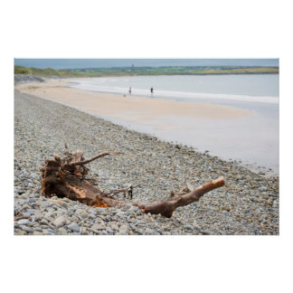 driftwood on pebbled beach poster