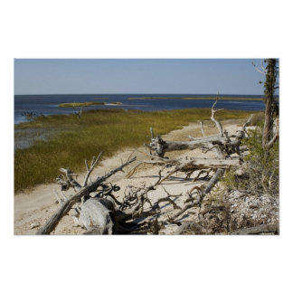 Driftwood on the Beach Posters
