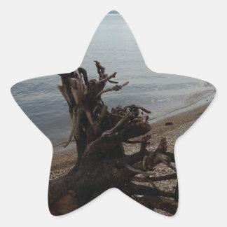 Driftwood on the Beach Star Sticker