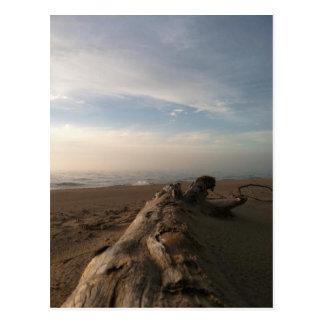Driftwood On The Lake Postcard
