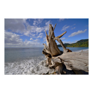 Driftwood On The Shoreline Of French Beach Poster