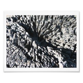 Driftwood Art Photo
