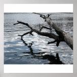 Driftwood reflection print