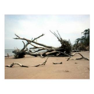 Driftwood Trees Postcard