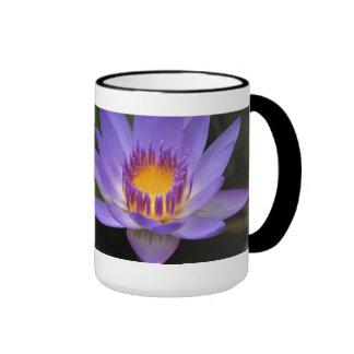 Drink Positive Floral Motivational Mugs