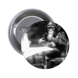 Drinking Chimpanzee Vintage National Zoo Pinback Button