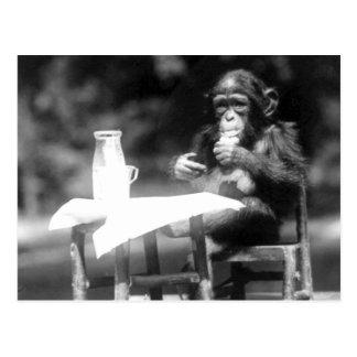 Drinking Chimpanzee Vintage National Zoo Postcard