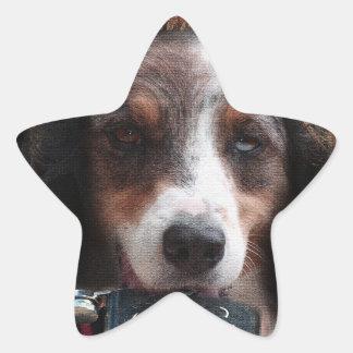 Drinking Country Dog Animals Star Sticker