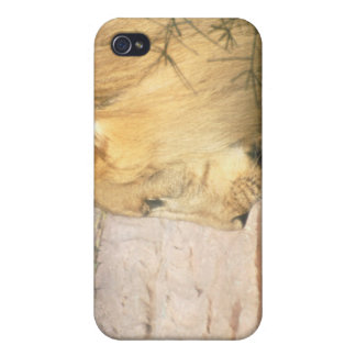 Drinking Lion iPhone Case Cover For iPhone 4