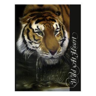 Drinking Tiger Postcard