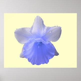 Dripping Daffodil Blue Print