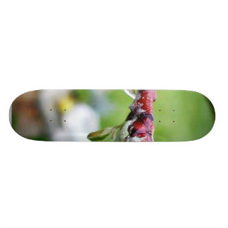Dripping Drops Water Branches Buds Rain Skateboard Deck