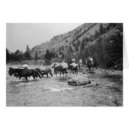 Driving pack mules across a river greeting card
