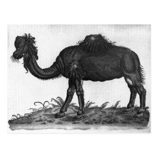 Dromedario, de 'Historial Animalium Postal