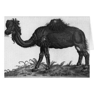 Dromedario, de 'Historial Animalium Tarjeta De Felicitación