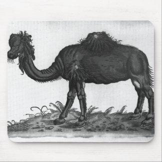 Dromedary, from 'Historial Animalium' Mouse Pad