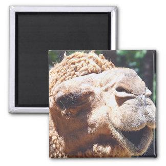 Dromedary One Hump Camel Face Closeup Magnet