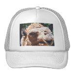 Dromedary One Hump Camel Face Closeup Mesh Hats