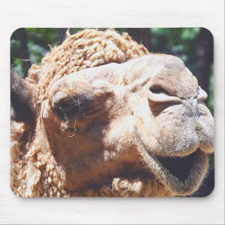 Dromedary One Hump Camel Face Closeup Mouse Pad