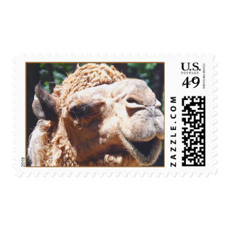 Dromedary One Hump Camel Face Closeup Stamps