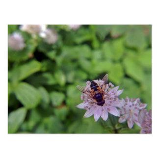 Drone Flower Version 1 Postcard