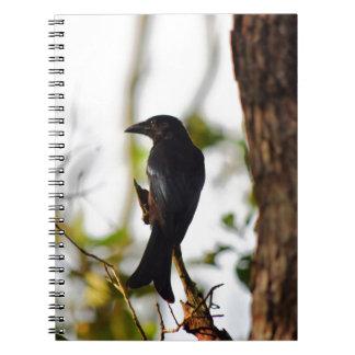 DRONGO BIRD RURAL QUEENSLAND AUSTRALIA NOTEBOOK