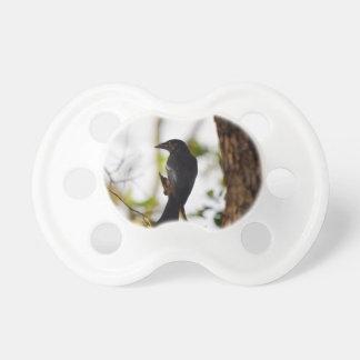 DRONGO BIRD RURAL QUEENSLAND AUSTRALIA PACIFIER