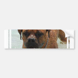 Drooling Bordeaux Mastiff Bumper Sticker