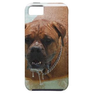 Drooling Bordeaux Mastiff iPhone SE/5/5s Case