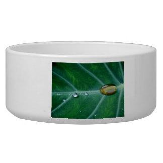 Drop of rain on a green leaf dog bowl