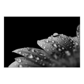 Droplets (Black and White) Poster