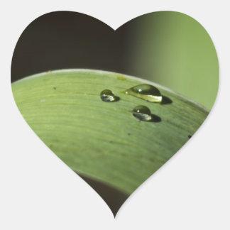 Droplets on a Leaf Heart Sticker