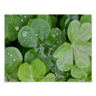 Droplets on clover poster
