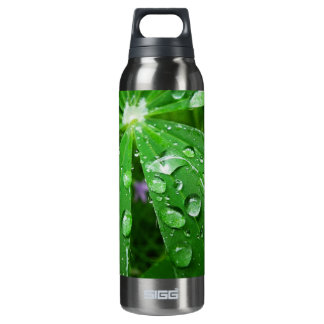 Droplets on Green Plant 16 Oz Insulated SIGG Thermos Water Bottle