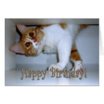 Dropping In Kitty - Happy Birthday! Card