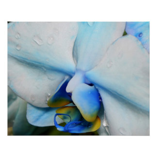 Drops on Blue Orchid Posters