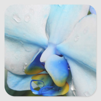 Drops on Blue Orchid - Sticker